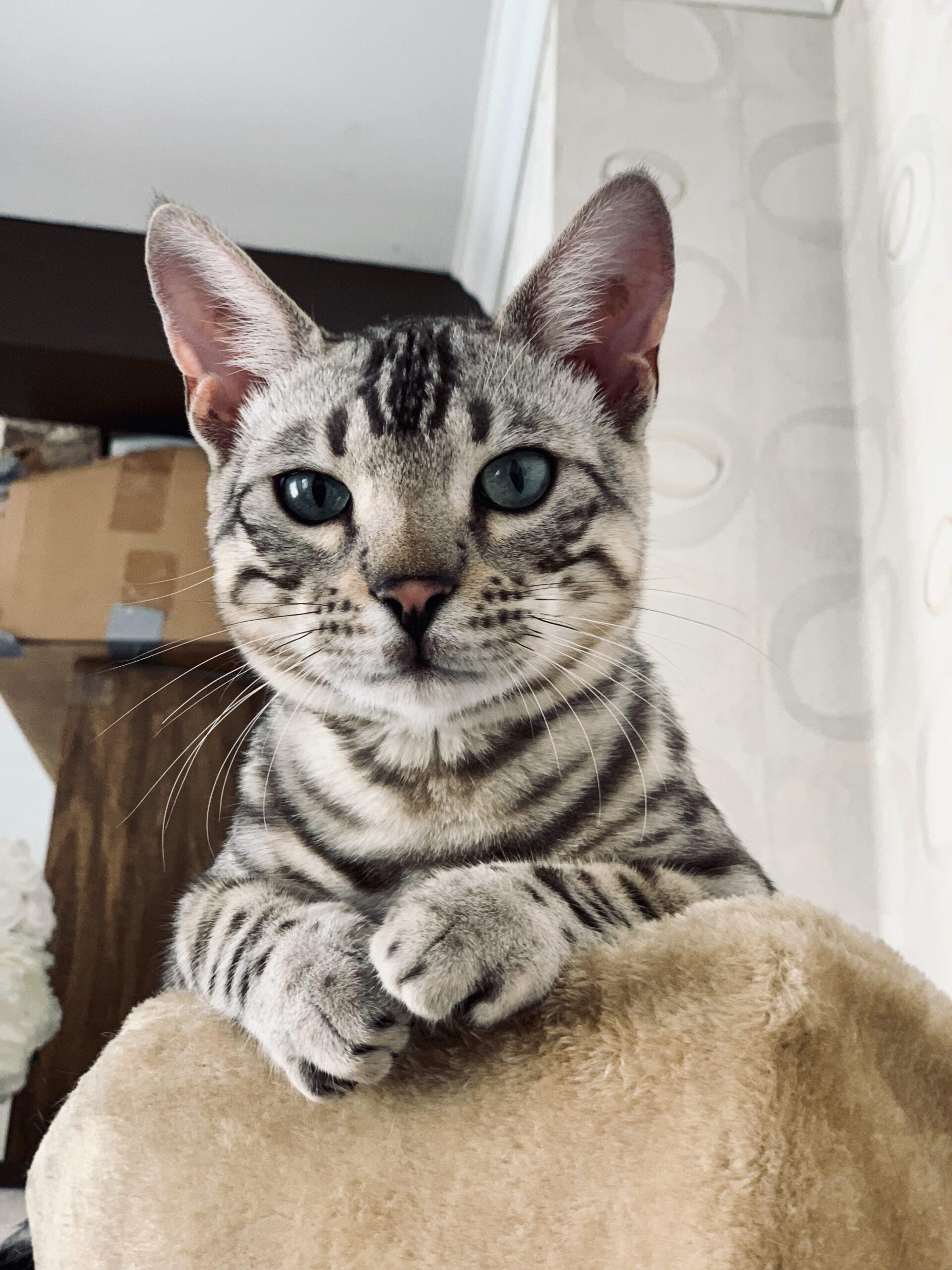 Kuidas kass šokeeris mind keset kõige imepärasemat ja müstilisemat kogemust